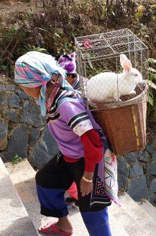 Avis groupe catherine Yunnan