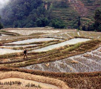 Avis groupe Chavenas Yunnan