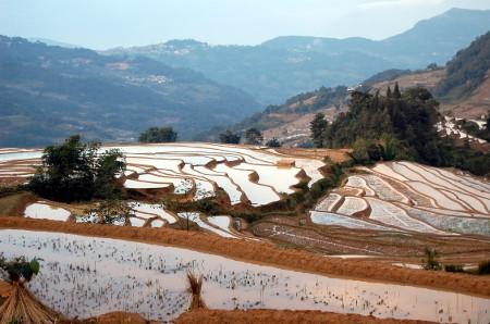 avis marcel margaret Yunnan