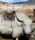 circuit_caravanes-tibetaines-shangri-la-7