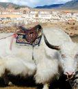 circuit_voyage-yunnan-tibet-6