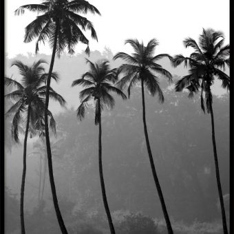 palms_PkVOEW