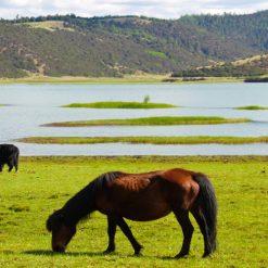 Parc Pudacuo 普达措国家公园