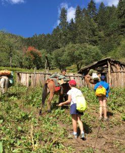 trek-villages-alpages-lacs-shangri-la