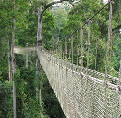 Skytree - canopée de Mengla 望天树景区