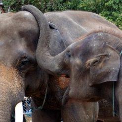 Vallée des éléphants sauvages 野象谷热带雨林景区