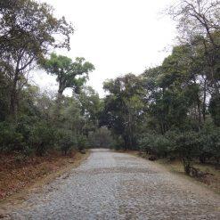 Jingmaishan 景迈山