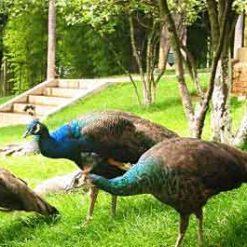 Zoo de Kunming 昆明动物园