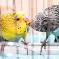 Marché aux fleurs et aux oiseaux 花鸟市场